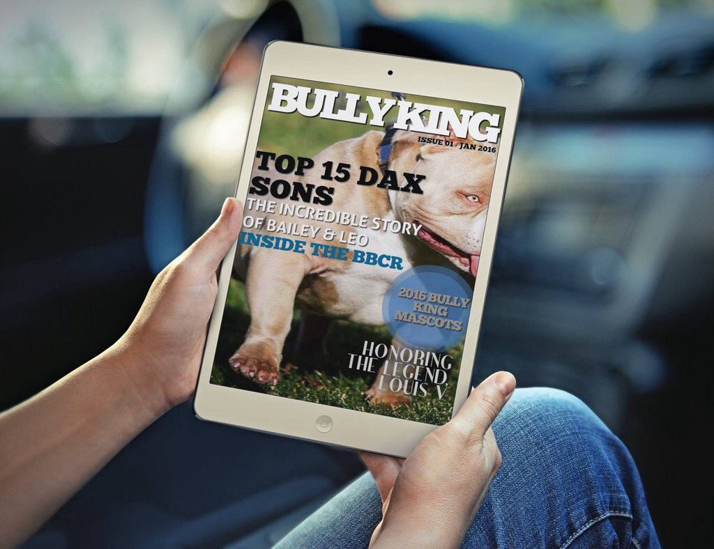 BULLY KING App: Download in the App Store & on Google Play! Update, Multiple Languages & New Interactive Features Coming Soon!